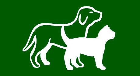 hund og katt i profil