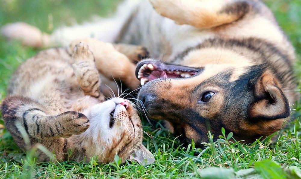 hund og katt ligger på ryggen og koser seg