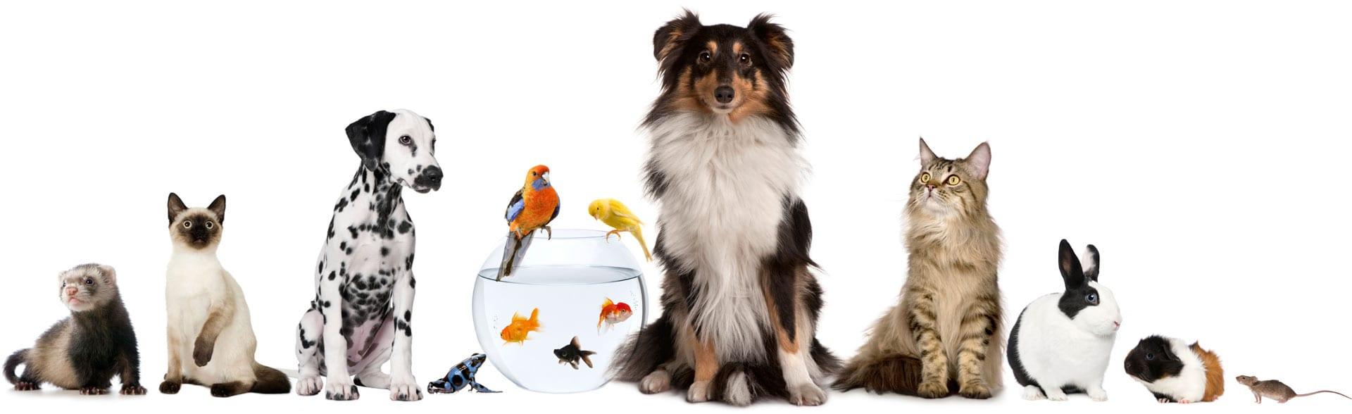 ulike husdyr