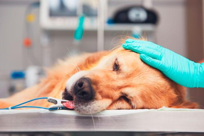 operasjon av hund